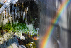 Icebow (snowyturner) Tags: rainbow ice crystals freezing icicles morning burrator rocks moss branches light