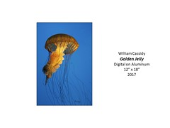"""Golden Jelly • <a style=""""font-size:0.8em;"""" href=""""https://www.flickr.com/photos/124378531@N04/39221155025/"""" target=""""_blank"""">View on Flickr</a>"""