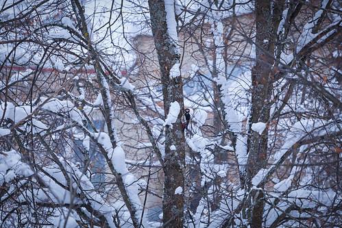 Woodpecker ©  бґЂЙґбґ…КЏ ᴏɴᴇ