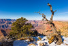Around Desert View (rainer.menes) Tags: grandcanyon desert view winter landscape tree sky coloradoriver
