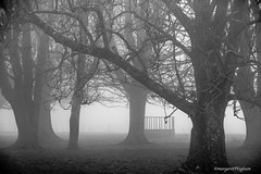 misty day (Margaret Preuss-Higham) Tags: farming agricultural agriculture cattlefeeder dorset must trees