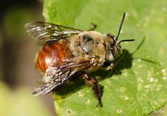 DSC_5352 (DigiPhotus) Tags: digiphotus macro macrodreams joaninha painel besouro bee abelha mosca serracatarinensebrasilamérica serra santacatarina santaebelacatarina