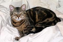 Bruce is a pretty kitty (cantrellcode) Tags: khaki