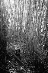 Una mirada diferente... (retver) Tags: elmarquesat spain valenciancommunity abandoned debris ruralphotography problem ecological danger fields rural