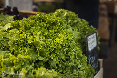 Lettuce (MorellaVZ) Tags: food lettuce salad photography