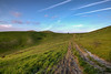 Verdi Colline (gianKE) Tags: italia tuscan tuscany hill landscape hills toscana italy nature italian green rolling field countryside summer spring tree typical agriculture rural scenic meadow farm scenery farmland