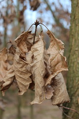 I forgot to drop my leaves (Sven Bonorden) Tags: forest leaves brown winter wald blätter braun