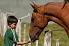 20180222_9338_1D3-200 Ethan and the horse (johnstewartnz) Tags: 70200 70200mm 70200f28 1dmarkiii 1d3 1dmark3 1d 1dmk3 1dmkiii ethan horse