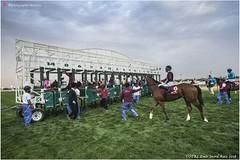DSC03099 copy (Services 33159455) Tags: qatar doha horse racing qrec emir horseracing raytohgraphy