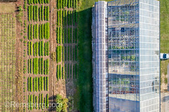 Shot looking directly down at greenhouse building with rows of crops planted next to it, Tifton, Georgia. (Remsberg Photos) Tags: farm georgia tifton grass turf sod soil lawn outdoors thesouth americansouth turfcapital agriculture aerial drone rows greenhouse glass plantnursery builtstructure botany conservatory highangle hothouse farming sunlight controlledclimate protection regulated enviroment usa