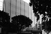 Verticals (bhop) Tags: los angeles california leica m6 rangefinder canon 50mm f14 ltm screwmount kodak trix film bw blackandwhite monochrome filmshooter filmcamera leicam leicam6 architecture downtown downtownla