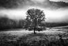 Morning Fod, Bromont, Qc, Canada (SebRiv) Tags: chalet noiretblanc beatnick bromont2016 balnea lumixgx8 olympusmzuiko1240f28pro brumematinale morningfog mysterious monochrome arbre blackandwhite fog vapor tree