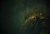 Les eaux du Niddeck (Mylene Gauthier) Tags: 2014 août canada couleur essencesindigènesduquébec lumière mylenegauthier mytheetlégende nikond7100 paletteestivale parcnationaldesîlesdeboucherville paysagepolychrome plandeau québec texture vert été parc national des îlesdeboucherville