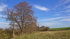 DSC03513 (dreptacz) Tags: polskakujawy kujawy lustrzanka pole rzeka potok drzewa trawa niebo chmury niebieski zielony sony slt flickrunitedaward nowymłyn