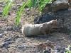 Halona Blowhole & Hanauma Bay Nature Preserve (11) (pensivelaw1) Tags: hawaii oahu halonablowhole hanaumabaynaturepreserve