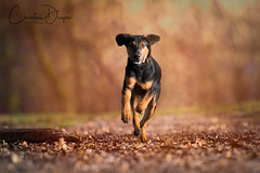 Egg ~ Explored 11.1.2018 #154 (Christina Draper) Tags: 154 explored petphotography woods pet puppy hound dog
