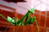 res4 (nigeldunn73) Tags: insect macro praying mantis panasonis lumix fz1000