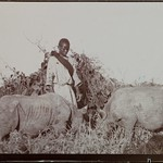 Two rhinos and person in the grass. thumbnail