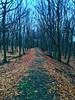There will be a way (Fabi Drozd) Tags: grün green grass orange blätter leaves laub kühl cold grey kalt grau trampelpfad weg pfad path way bäume baum trees tree holz wood winter wald forest