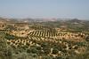 un'isola a pois (Maluni) Tags: creta greece grecia crete olives ulivi nature natura vegetation green verde