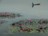 Lake Sebu (BLUEPEAK19) Tags: lake mindanao fishing philippines south cotabato