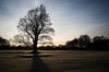 A Winter's Tree (GlasgowPhotoMan) Tags: winter wintertree tree beech pollokcountrypark pollokestate pollokgolfclub pollokhouse glasgow sunset dusk scotland