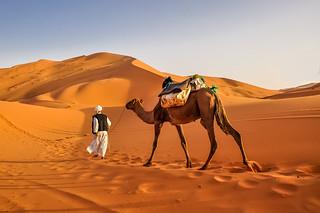 Camel at Erg Chebbi - Sahara desert... [Erg Chebbi, Morocco - 2012]