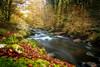 Le Scorff (Faouic) Tags: france bretagne morbihan pontcallec forêt lescorff rivière automne