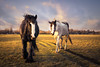 Curios Horses on Port Meadow (chrizbrook) Tags: portmeadow field winter horses wildhorses landscape