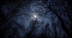 26.01.2018 moonlight trees (FotoTrenz NRW) Tags: moonlight trees nightshot sky blue darkness forest moon dark nature benches mondlicht dunkelheit nacht mystic nachthimmel bäume zweige mondschein