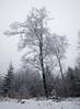 Standing Tall (KalleKrabowsky) Tags: winter forrest taunus hohe wurzel