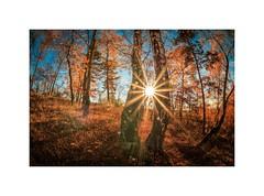 Sonne im Birkenrahmen (linke64) Tags: thüringen deutschland natur landschaft laub blätter wald sonne herbst himmel rahmen birken bäume strahlen sonnenstrahlen