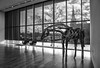 Gallery with Horse (tim.perdue) Tags: columbus museum art cma cmoa mycma ohio gallery black white bw monochrome horse sculpture wooden window room chairs reflection church trees sky clouds silhouette