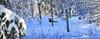 Winter Moose having rest_2018_02_04_0009 (FarmerJohnn) Tags: hirvi moose elk mammal animal animalplanet eläin metsäneläin forest wild wildlife wilderness erämää metsä metsästys hunting moosehuntingwithcanon winter talvi snow thick thicksnow lumihanki lumi lumessa insnow game riista canon canonphotography eos canoneos5dmkiii 5d mkiii canonef7020040lisusm finland suomi laukaa valkola juhanianttonen