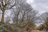 Offchurch Greenway 4th February 2018 (boddle (Steve Hart)) Tags: wild wilds wildlife life nature natural bird birds flowers flower fungii fungus insect insects spiders butterfly moth butterflies moths creepy crawley winter spring summer autumn seasons sunset weather sun sky cloud clouds panoramic landscape offchurch greenway 4th february 2018 100400mm is usm ii 2470mm standard steve hart boddle steven bruce wyke road wyken coventry united kingdon england great britain canon 5d mk4 6d unitedkingdom gb