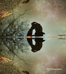 Rainwater (Stephenie DeKouadio) Tags: canon photography outdoor art artwork shadow shadows rain winter washington washingtondc dc dcphotos dcurban urban urbandc portrait selfportrait hypnotique