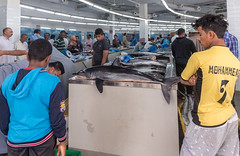 Muttrah Fish Market, Oman (lyndakmorris) Tags: muscat oman muttrah fish