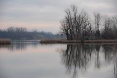 Szigetújfalu - Little Danube / Hungary (Torok_Bea) Tags: danube danuberiver szigetújfalu hungary winter landscape sigma nikon nikond5500 littledanuba kisduna