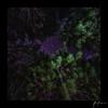 2018-02-18_Okains_bay_004.jpg (Rojobin) Tags: night milkyway landscapes deepsky forest astrophotography