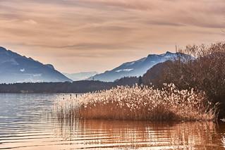 Winter silence at the lake