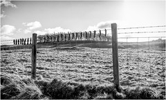 Don't sit on the fence . (wayman2011) Tags: f2 fujifilmxf18mm lightroomfujifilmxt10 wayman2011 bwlandscapes mono rural fences moles trees pennines dales teesdale mickleton countydurham uk