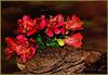 Mopani log with red flowers (JAKE473) Tags: mopani log with red flowers still life