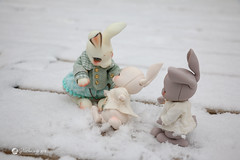 2018jinju-family07 (Nathy1317) Tags: ウサギ 兎 雪 冬 lapin neige hiver extérieur cocoriang peppi tobi animal