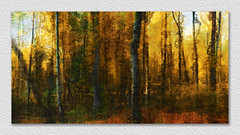 painterly autumn forest (franzisko hauser) Tags: forest autumn outdoor nature sonyalpha7 structure