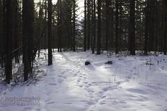 IMG_8254 (zawaski -- Thank you for your visits & comments) Tags: dogsledding fun zawaski©2018 snowwinter maddogsandenglishman boundry ranch ©2019robertzawaski ©2019 robert zawaski ©2019zawaski finephotography photog ambieantlight beauty