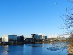 River Dee, Aberdeen, Jan 2018 (allanmaciver) Tags: river dee aberdeen blue shades ice seagull office blocks queen elizabeth bridge trees allanmaciver