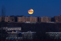 Semi lunar eclipse, blood moon and moonset from my window. (Gimo Nasiff) Tags: lunar bluebloodmoon moonset moon eclipse edgewater nj nyc uws upper west side new york city landscape citiscape urban riverside park hudson river gimo guillermo nasiff canon 5d mkiii canon5dmkiii sky outdoor bloodmoon