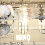 Beautiful reflection thumbnail