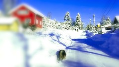 You need sunglasses to peek into my world,  it's very white. (evakongshavn) Tags: streetphotography streetlife streetview street winter road village myview house building red yellow redhouse houses buildings winterwonderland white snow snowy snowfall 7dwf landscape sundaylights