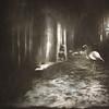 Bernie Tuffs - Hide and Seek Dreams (Bernie Tuffs - Digital Artist) Tags: dreams girl child hiding hideandseek flamingo birds water hidden darkness playing game